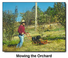 Michael in Tractor mode mowing the orchard